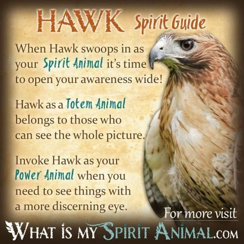 Hawk Spirit Guide Spirit Animal Guides Pinterest