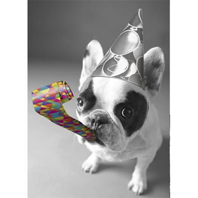 Bulldog With Party Horn Birthday Card By Graphique De France A