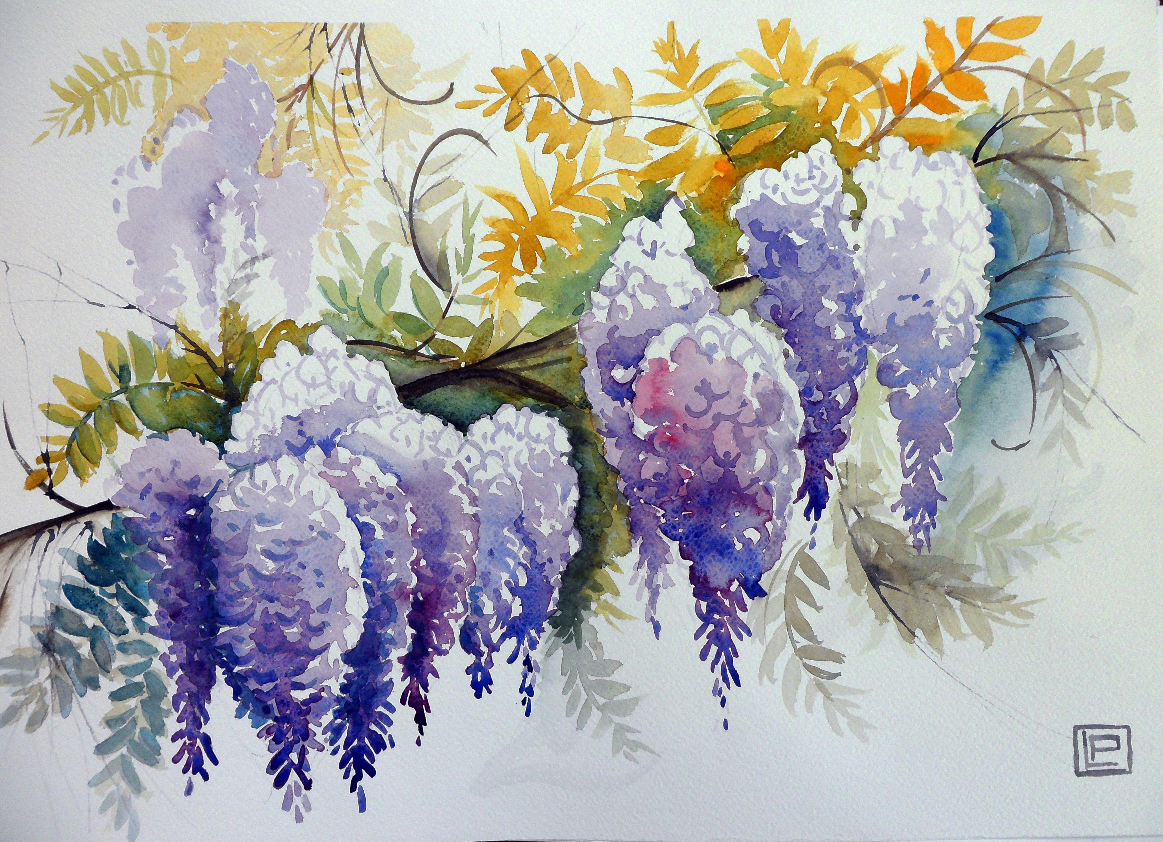Color glicine acquerello di lorenza pasquali 35x51 for Glicine disegno