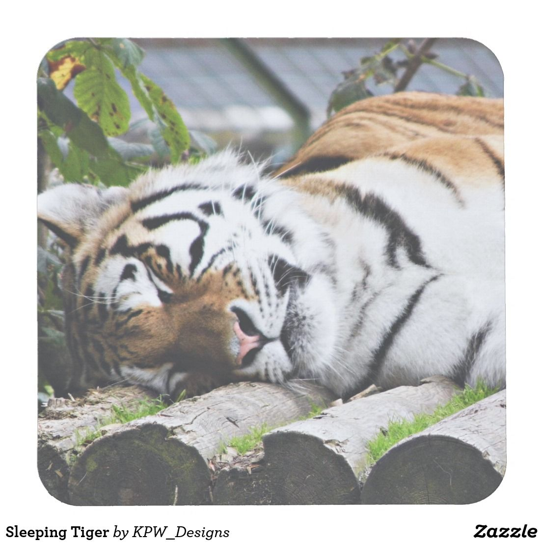 Sleeping Tiger Square Paper Coaster Zazzle tigers