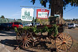 Hillside Tree Farm Apple Hill Camino California Tree Farms Christmas Tree Farm Northern California