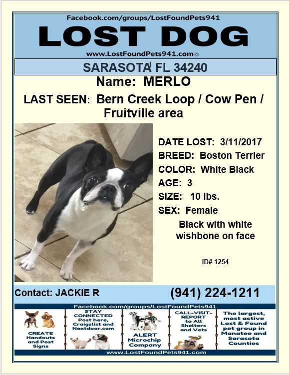 Have You Seen Merlo Lost Dog Bostonterrier Lostdogs Missing