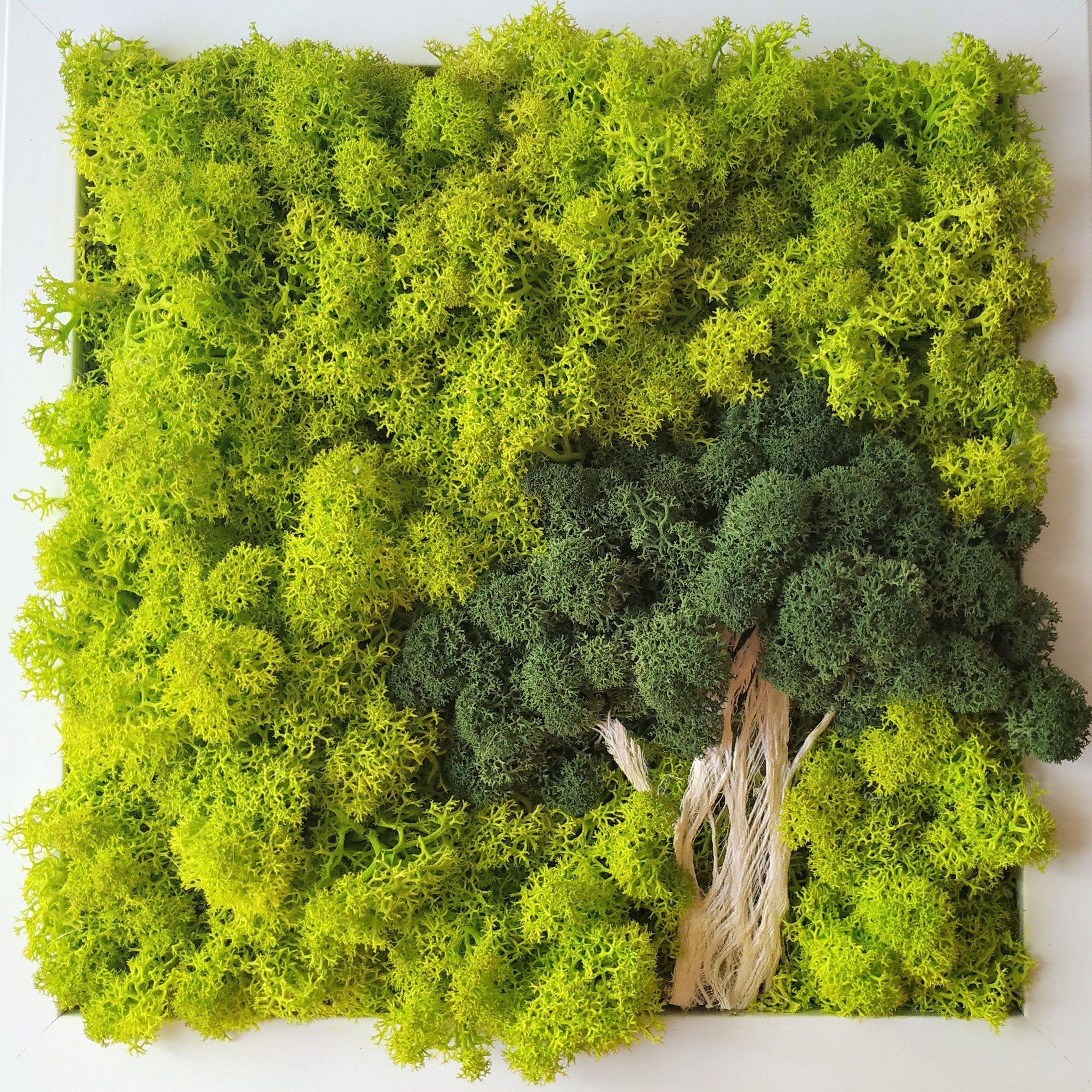 Scandinavian Moss Wall Art Tree Of Moss Reindeer Moss Wall Art