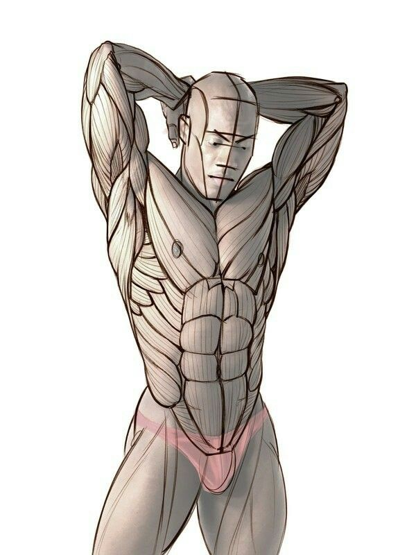 Pin de Cris G en Digital | Pinterest | Torso masculino, Anatomía y ...