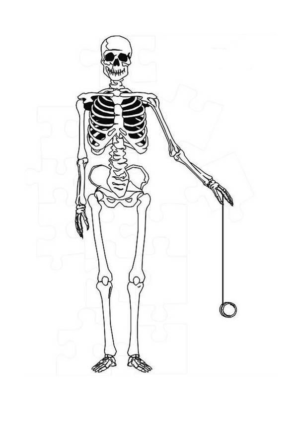 Read moreHuman Anatomy Skeleton Coloring Pages | Coloring ...