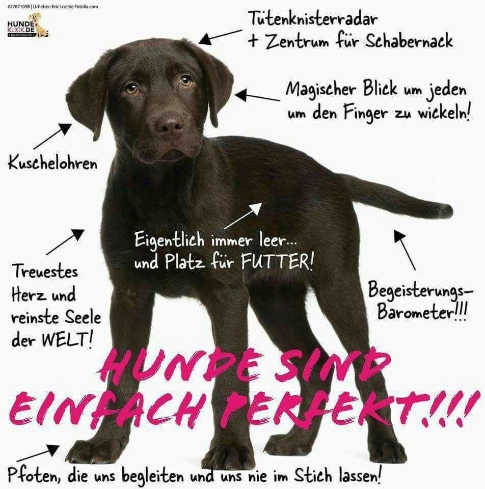 Pin Von Poinsignonlea Auf Puppies And Dogs Tiere Hund Lustige Tiere Hunde