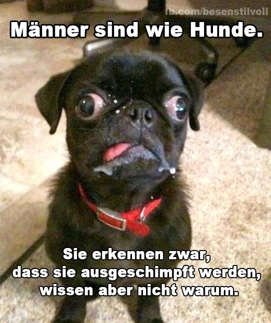 Seite 415 - Lustige (Fail-) Bilder :) | Hunde | Funny ...