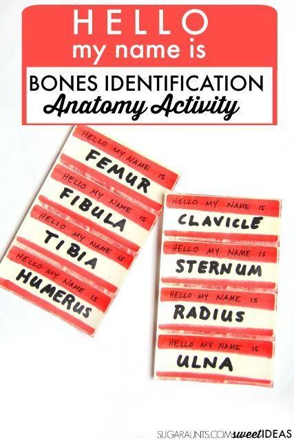 Bone Identification Movement Activity Learning Activities Human