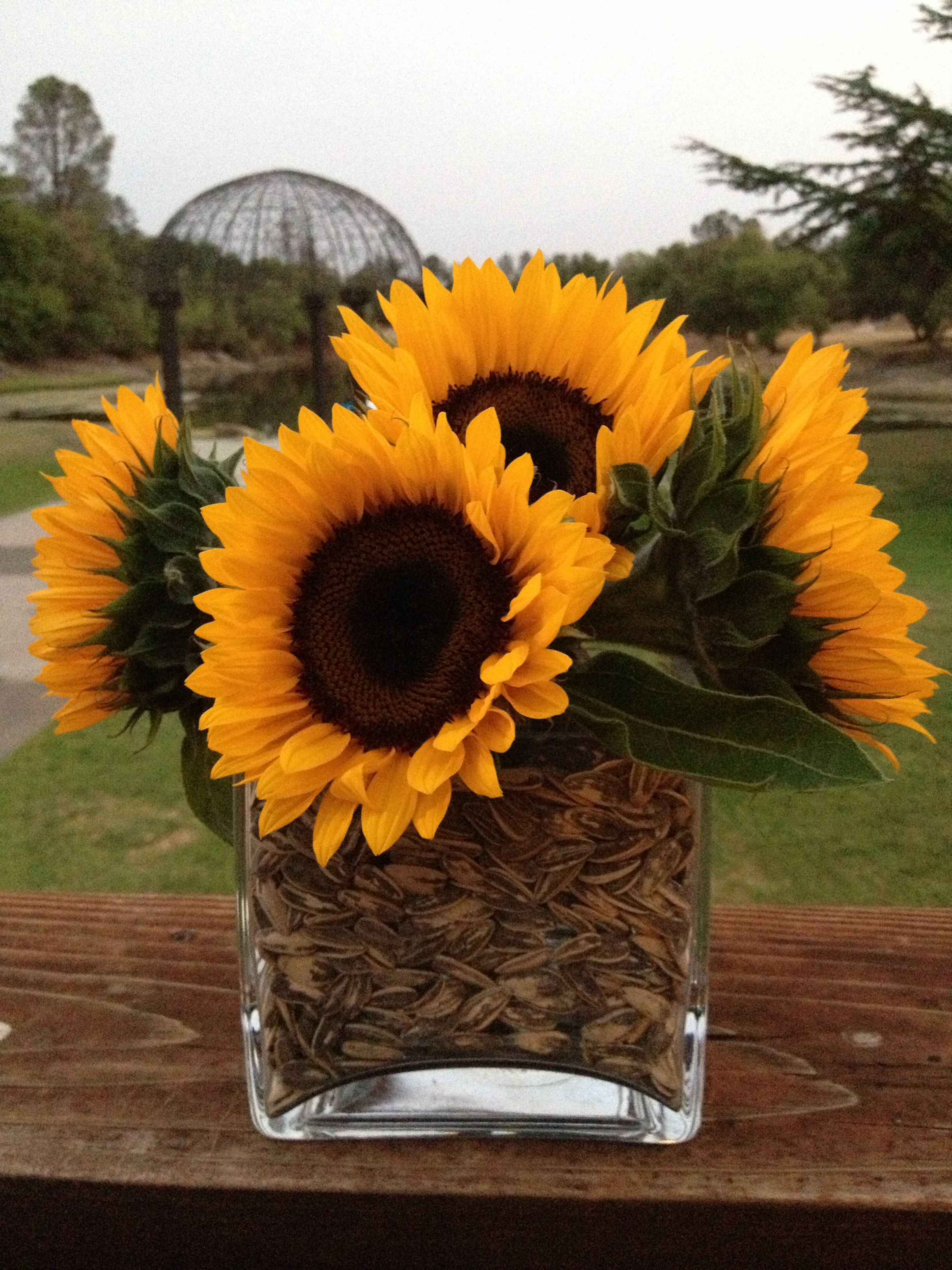 Simple centerpiece a vase inside a vase with sunflowers and a vase inside a vase with sunflowers and sunflower seeds voila reviewsmspy