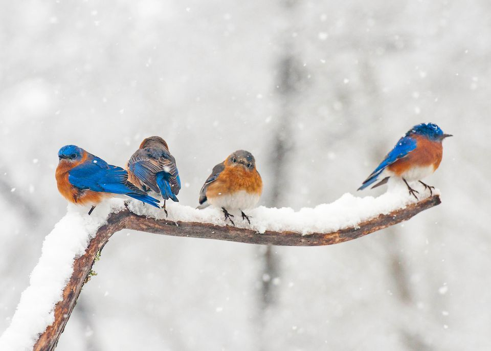 Attract birds to your yard in the winter how to attract