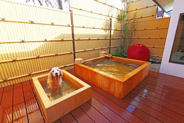 洗澡 吃飯 睡覺都一起 和狗狗一起享樂的溫泉旅館 鬼怒川 絆 開幕囉 露天風呂 温泉 旅館