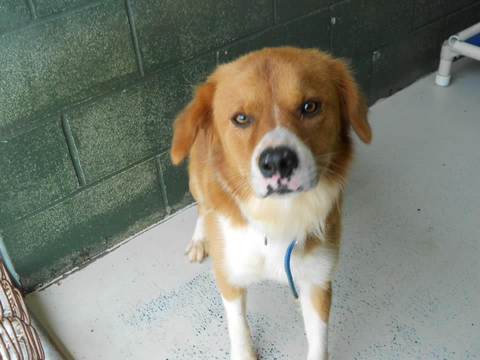 GA Shelter Dog Needs a Family Share Foster American