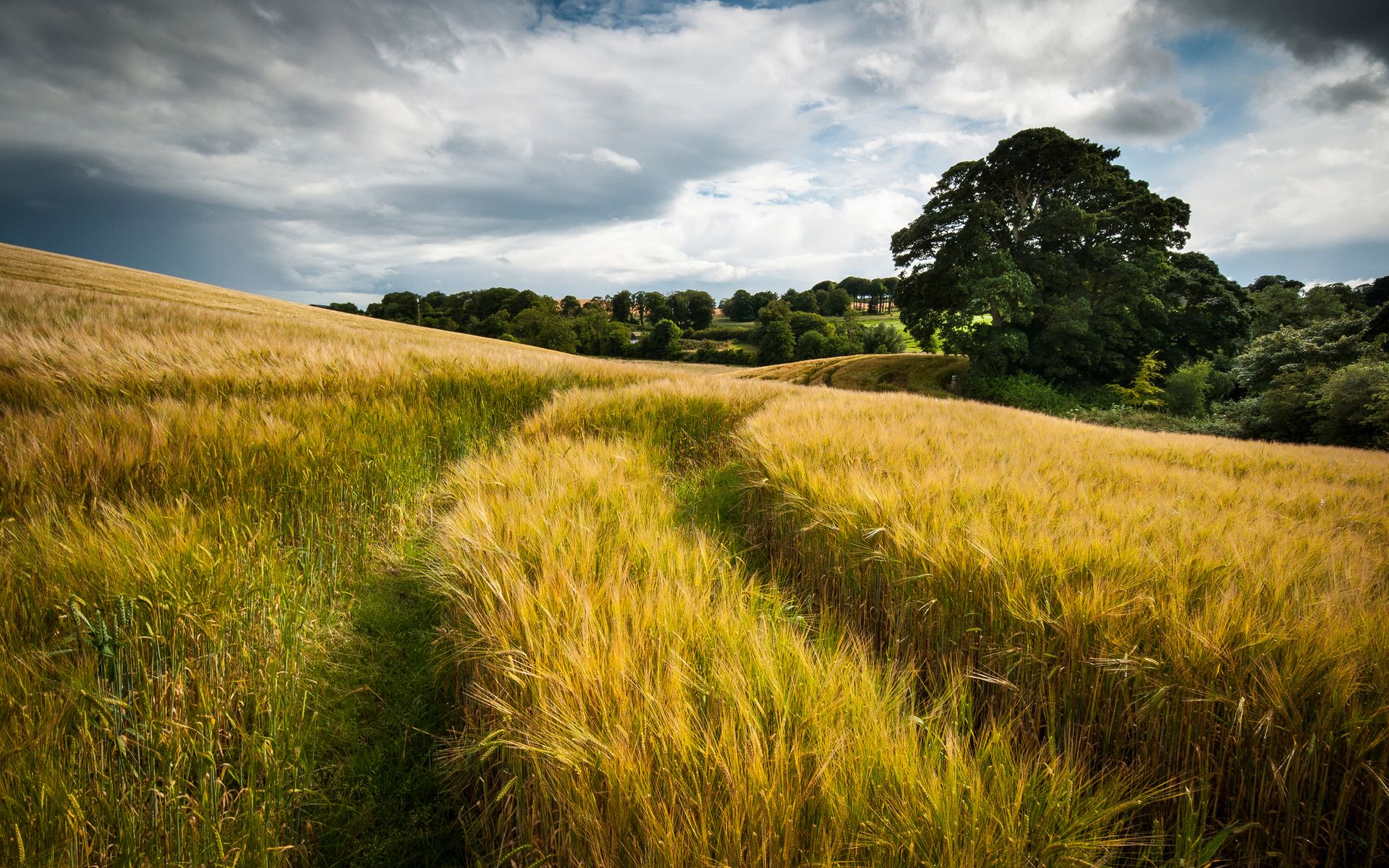 Nature Landscapes Fields Grass Wheat Hay Tracks Roads Path Gold Plants Trees Country Hills Autumn Fall Seas Field Wallpaper Landscape Wallpaper Landscape Trees Hd wallpaper field road summer grass