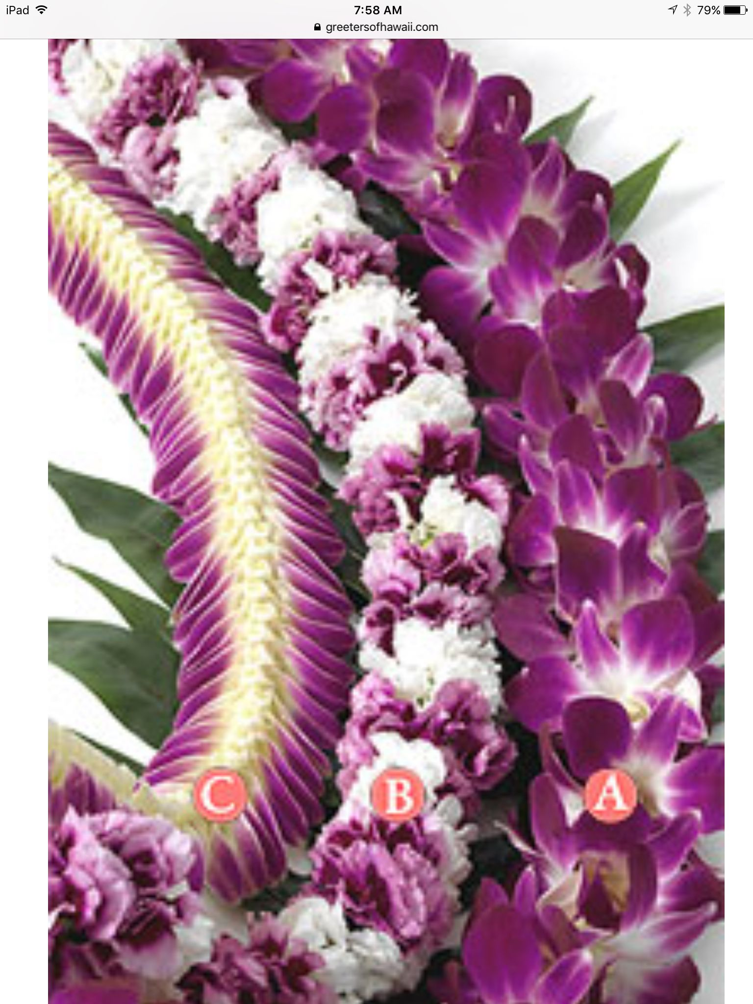 Specialty Fresh Orchid Graduation Leis Leis Flower Lei Orchids
