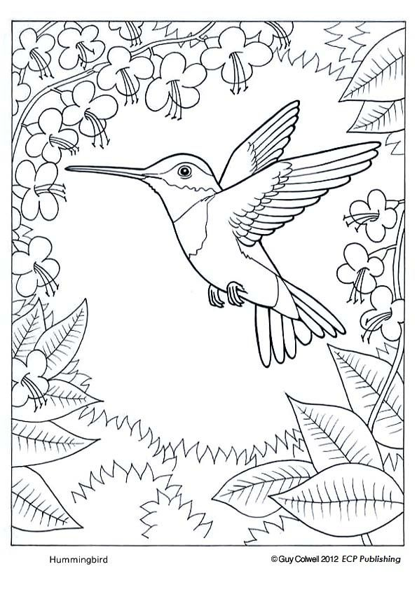 Humming Bird Coloring Page Bird Coloring Pages Animal Coloring