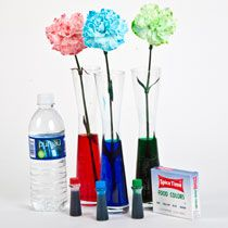 Teach kids all about plants and water absorption with this Food Color Flowers Experiment. They will be fascinated as they learn the important functions roots and stems!