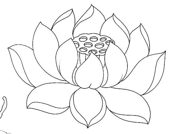 Lotus Flower Drawing Outline At Living Room In 2019 Flower