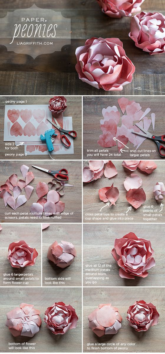 Diy paper peony craft diy photo tutorials pinterest paper paper peonies template and tutorial mightylinksfo