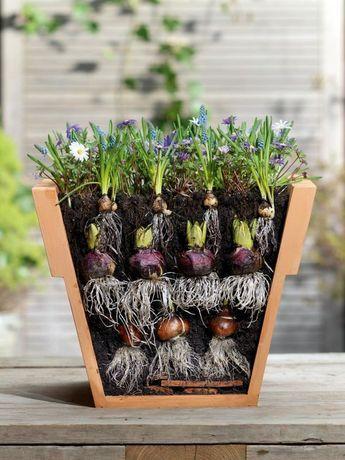 10 tipps rund um blumenzwiebeln garten pinterest garten garten pflanzen und blumenzwiebeln. Black Bedroom Furniture Sets. Home Design Ideas