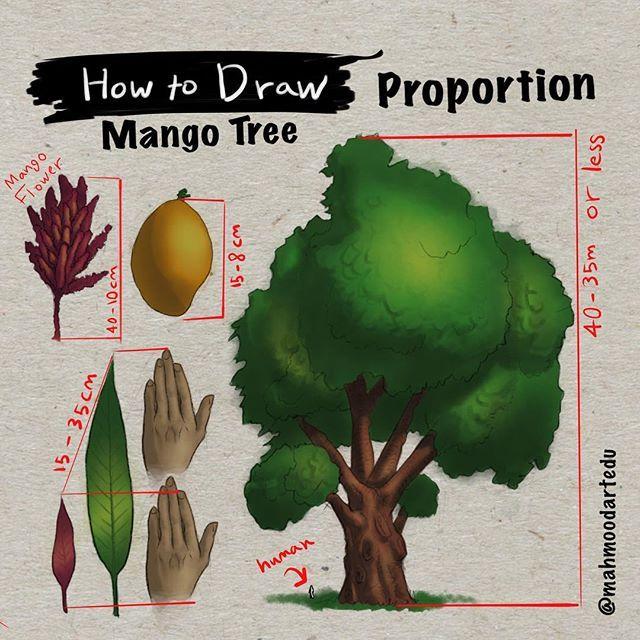 كيف ترسم شجرة المانجو القياسات How To Draw The Mango Tree Proportion Art Edu How To Draw Tutorial Howtodraw Proporti Mango Flower Instagram Posts Tree