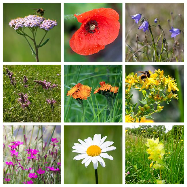 Welche Wildblumen Bluhen Im Juni In 2021 Wildblumen Sommerblumen Wildblumen Wiese