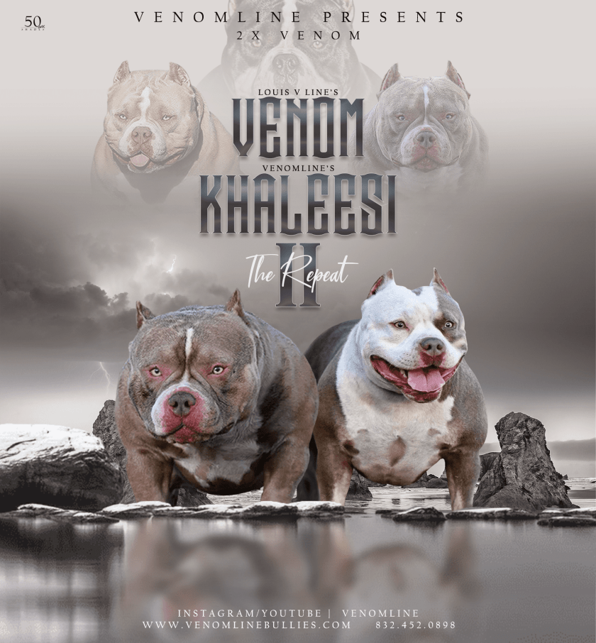 Pocket Bully Puppies For Sale New Breedings Venomline Pocket Bully Breeders Venomline Top Pocket America In 2020 Puppies For Sale American Bully Pocket Bully