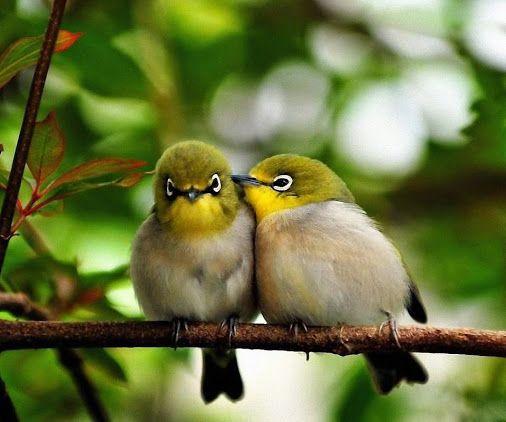 Jyoti Nagpurkar Google Nature Birds Love Birds Birds
