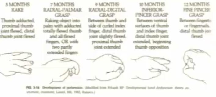 Development Of Hand Grasp