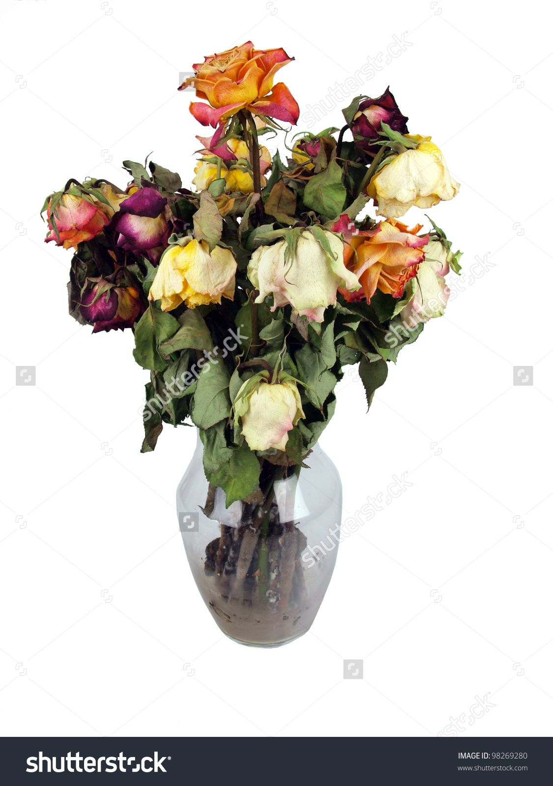 Stock photo a bouquet of dead roses in a clear glass vase 98269280 stock photo a bouquet of dead roses in reviewsmspy