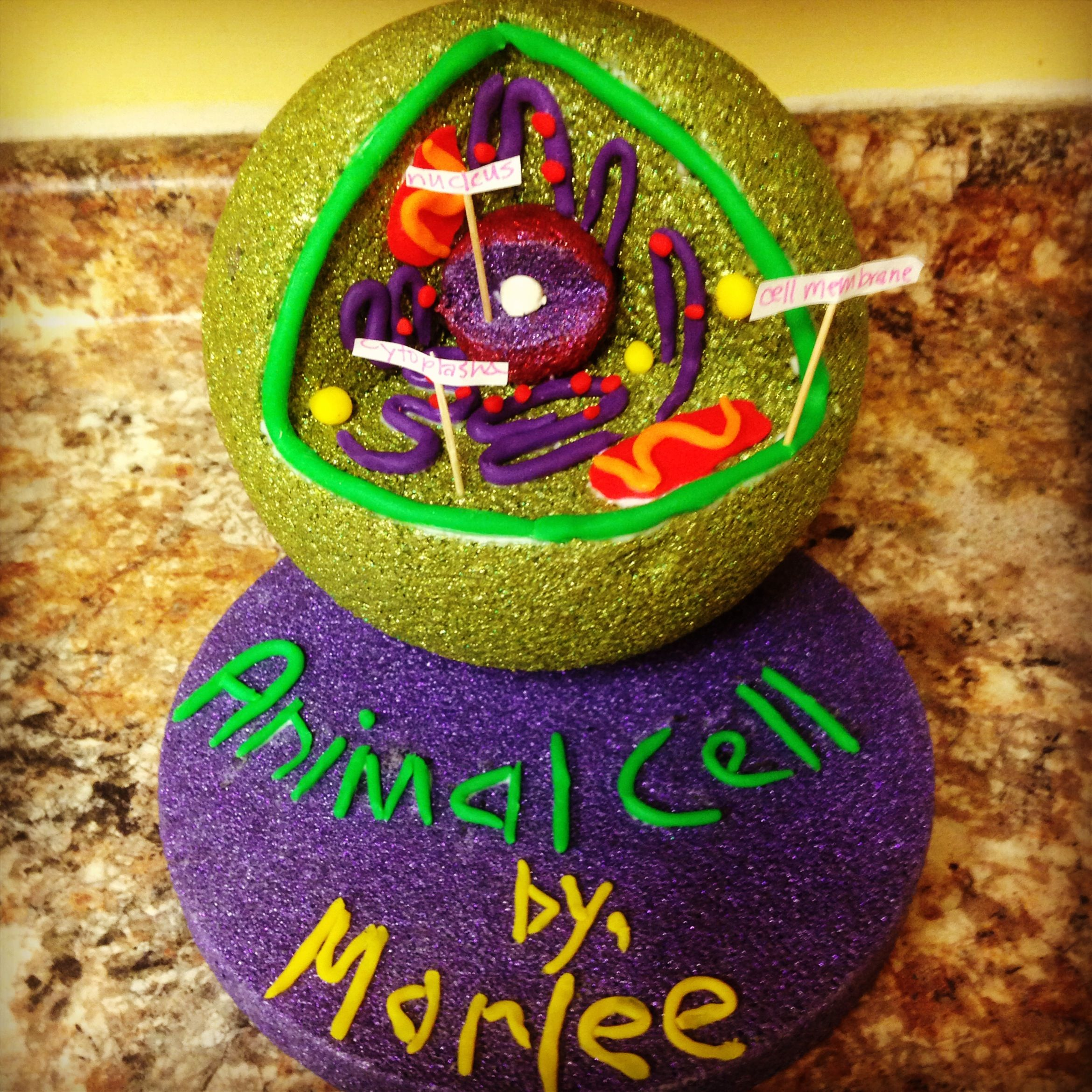 Cells Project, Animal Cell Project