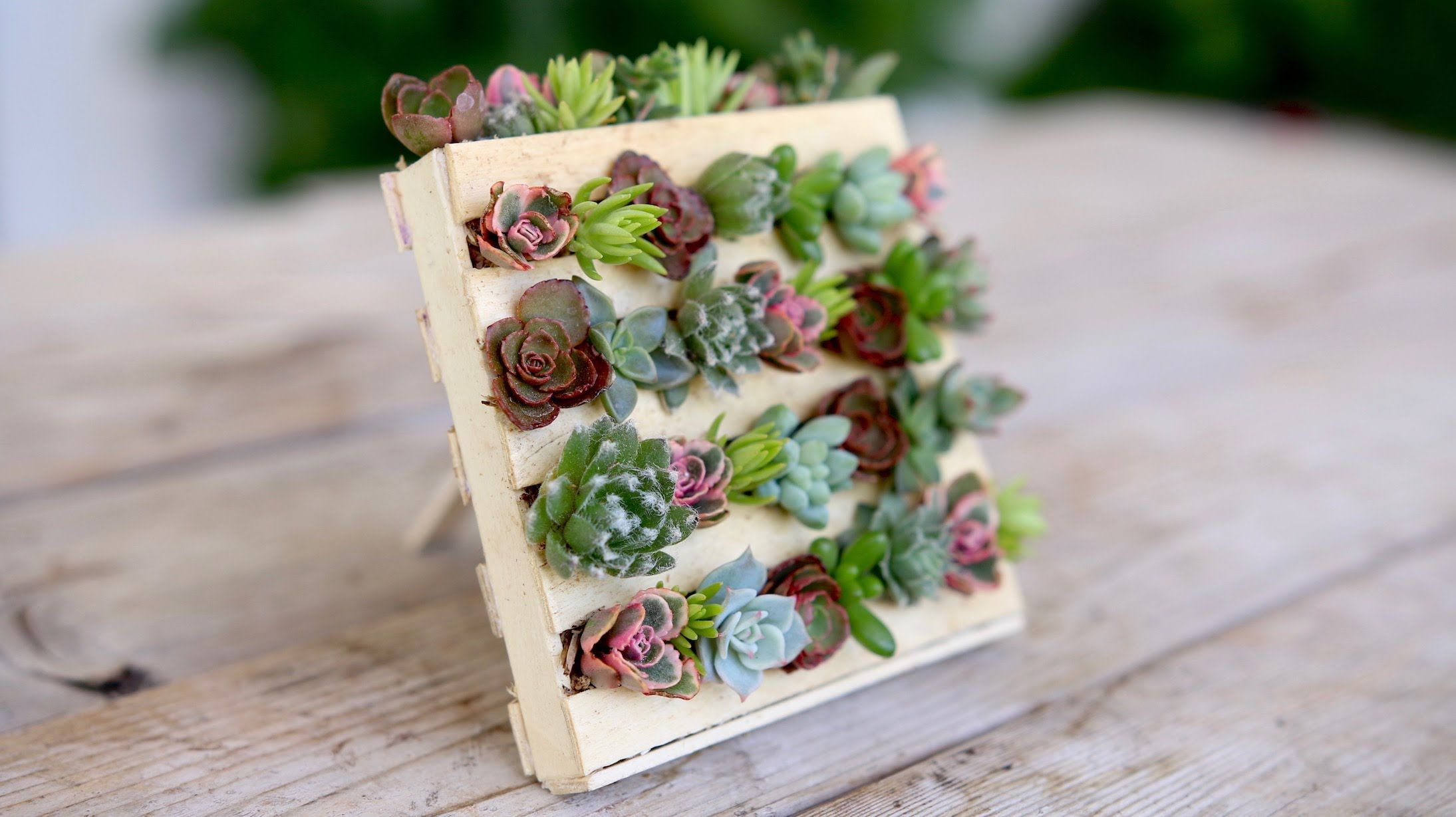 Popsicle Stick Mini Pallet W Succulents Garden Answer With