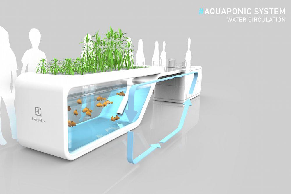 Aquaponics Not Robotics For Our Future Kitchens Aquaponics Backyard Aquaponics Aquaponics