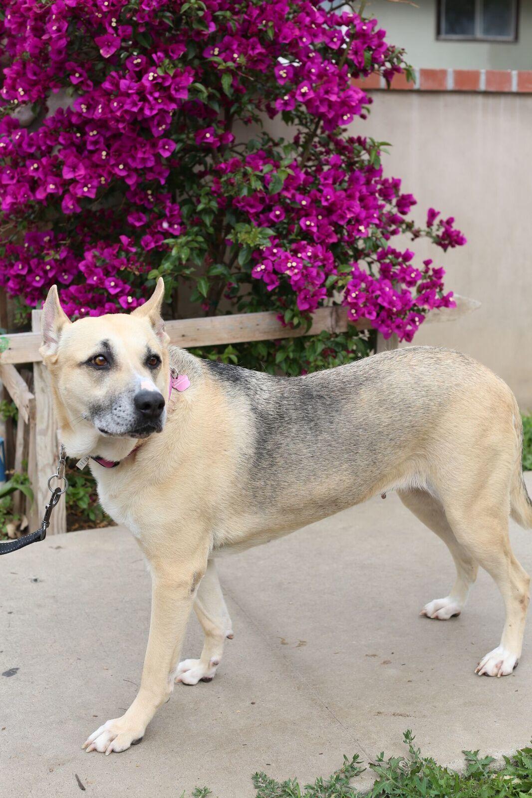 Adopt zoey on dog adoption animal welfare quote cat