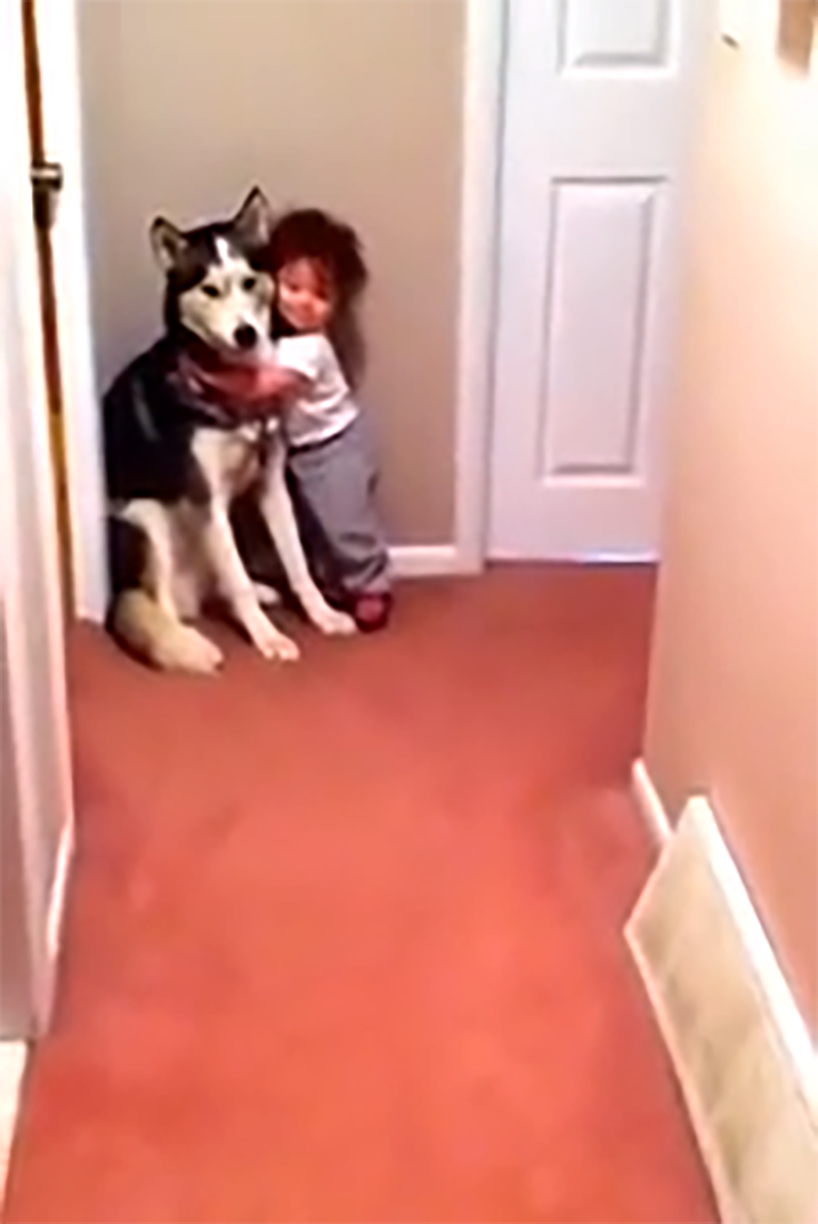 Aspirateur Husky Cutest Thing Toddler And Husky Scared Of Vacuum Cleaner Dogs