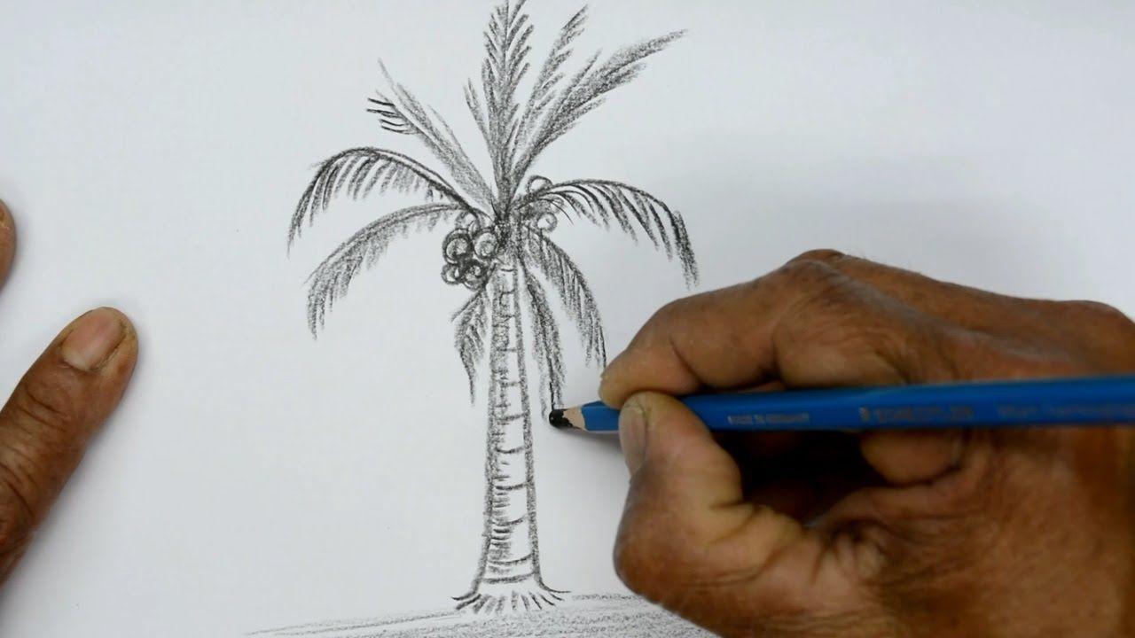 How To Draw A Coconut Tree Coconut Tree Drawing Coconut Tree Tree Drawing