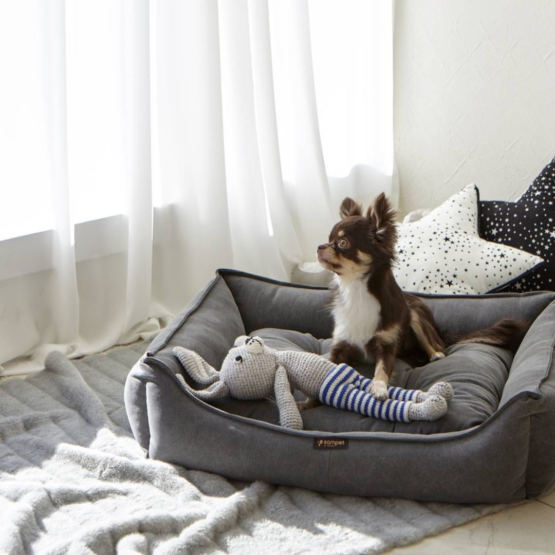 Chihuahua Dog cushions, Baby car seats, Bean bag chair