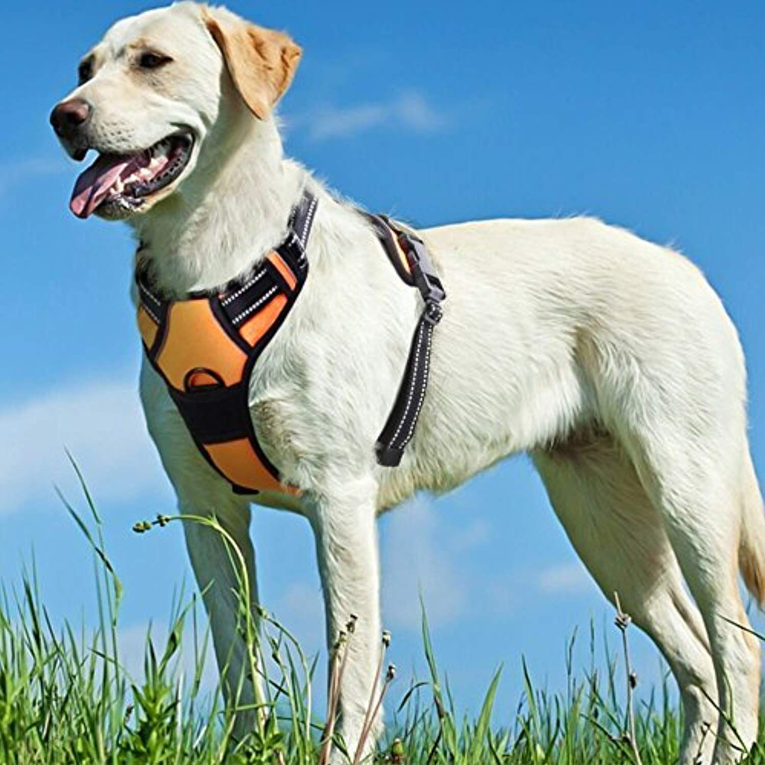 No Pull Dog Harness With Front Clip Walking Pet Harness With 2