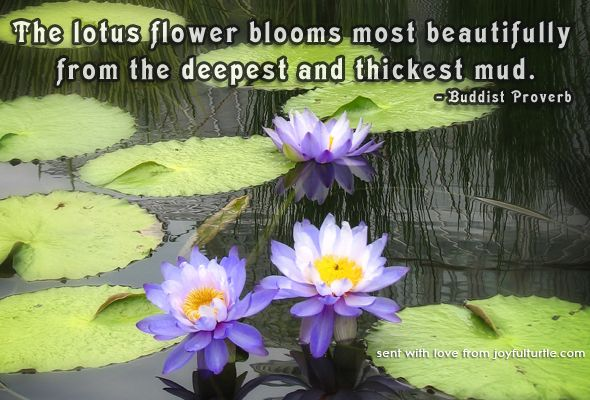 Lotus flower free to send e card with buddhist quote joyful turtle lotus flower free to send e card with buddhist quote joyful turtle mightylinksfo Choice Image