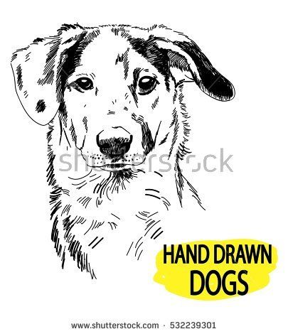 spotted dog drawing by hand a pen vintage drawing