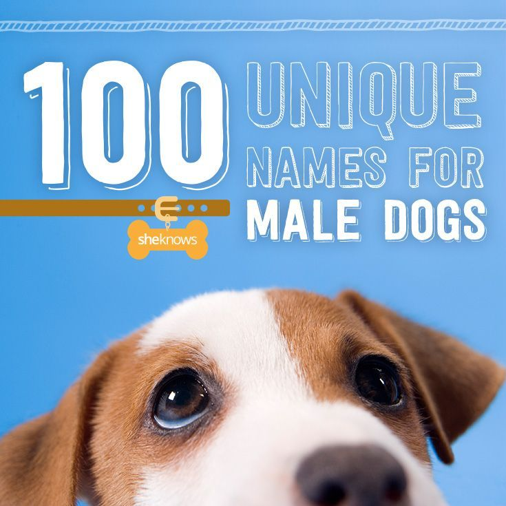 Good Names For Male Havanese Dogs