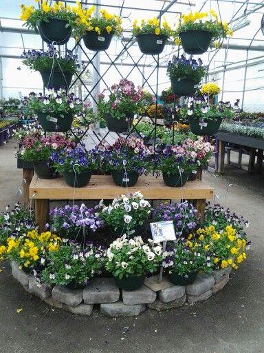 Trailing Pansy Hanging Baskets Garden Shop Garden Center