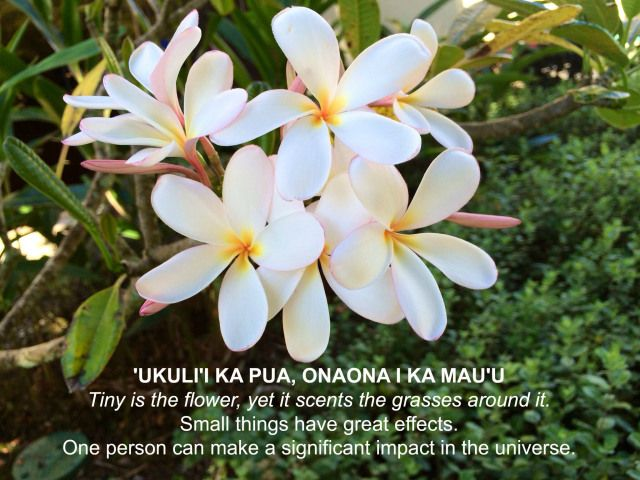 Tiny is the flower, yet it scents the grasses around it. Hawaiian-Proverbs