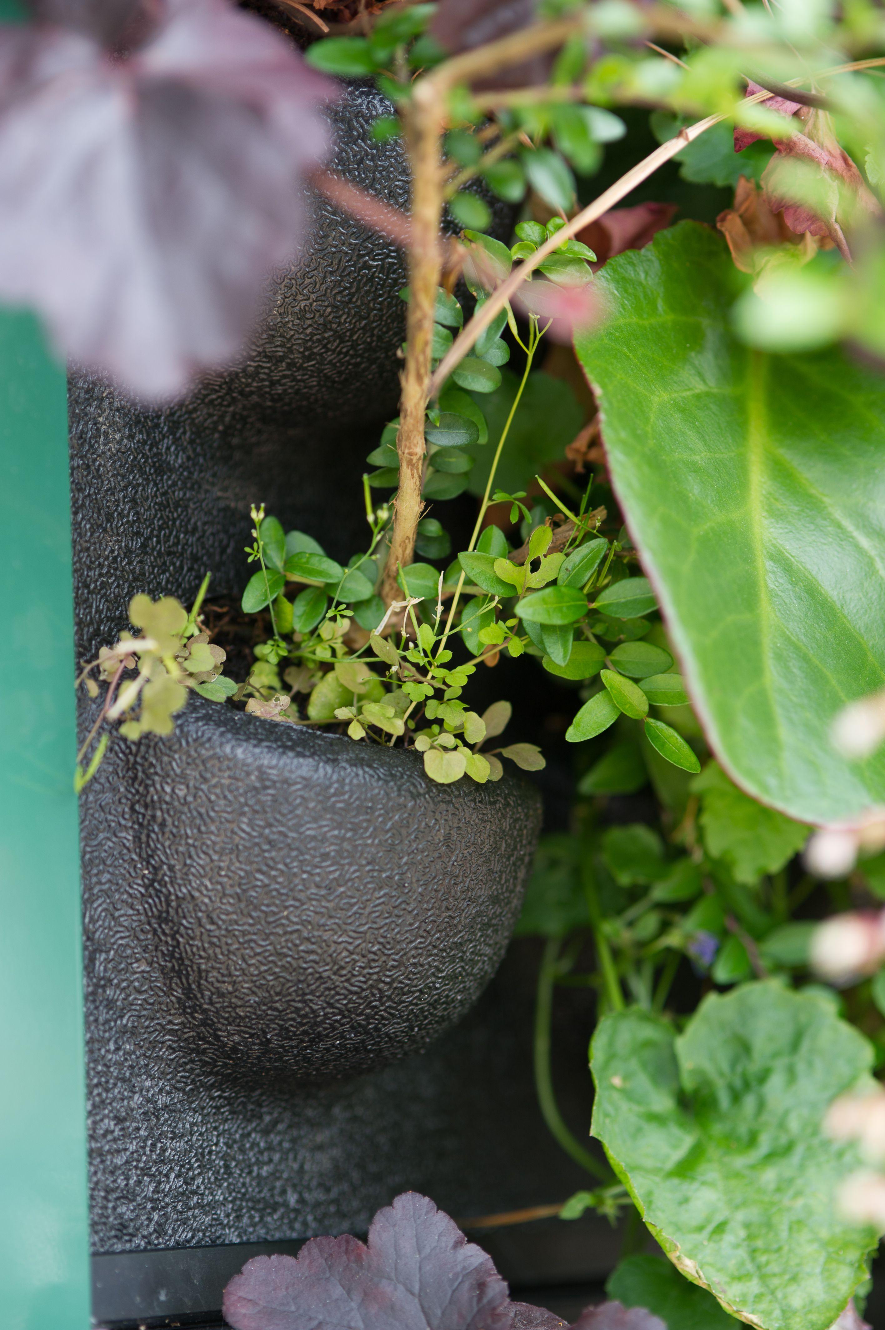 Mobilane LivePanel a sustainable vertical green wall Groene Muren Plant Muur Duurzaamheid