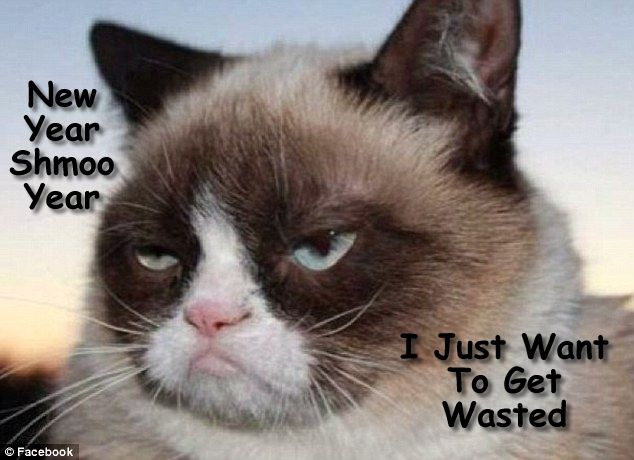 grumpy cat meme s by gary graefen