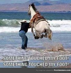 When You Step On Something In The Ocean  #Funny-Pics http://www.flaproductions.net/funny-pics/when-you-step-on-something-in-the-ocean/22759/?utm_source=PN&utm_medium=http%3A%2F%2Fwww.pinterest.com%2Falliefernandez3%2Fgreat%2F&utm_campaign=FlaProductions