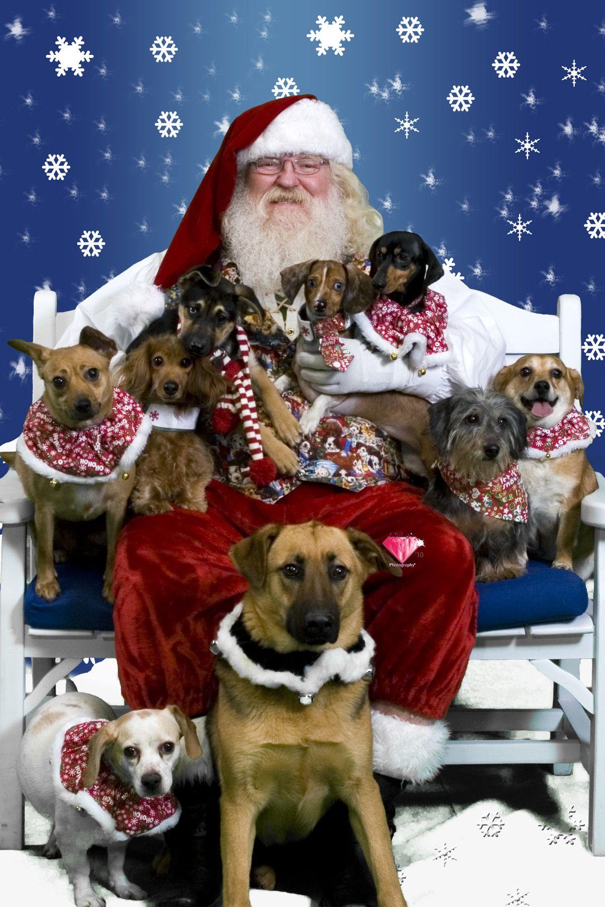 Christmas Pets Competition Winners Christmas animals