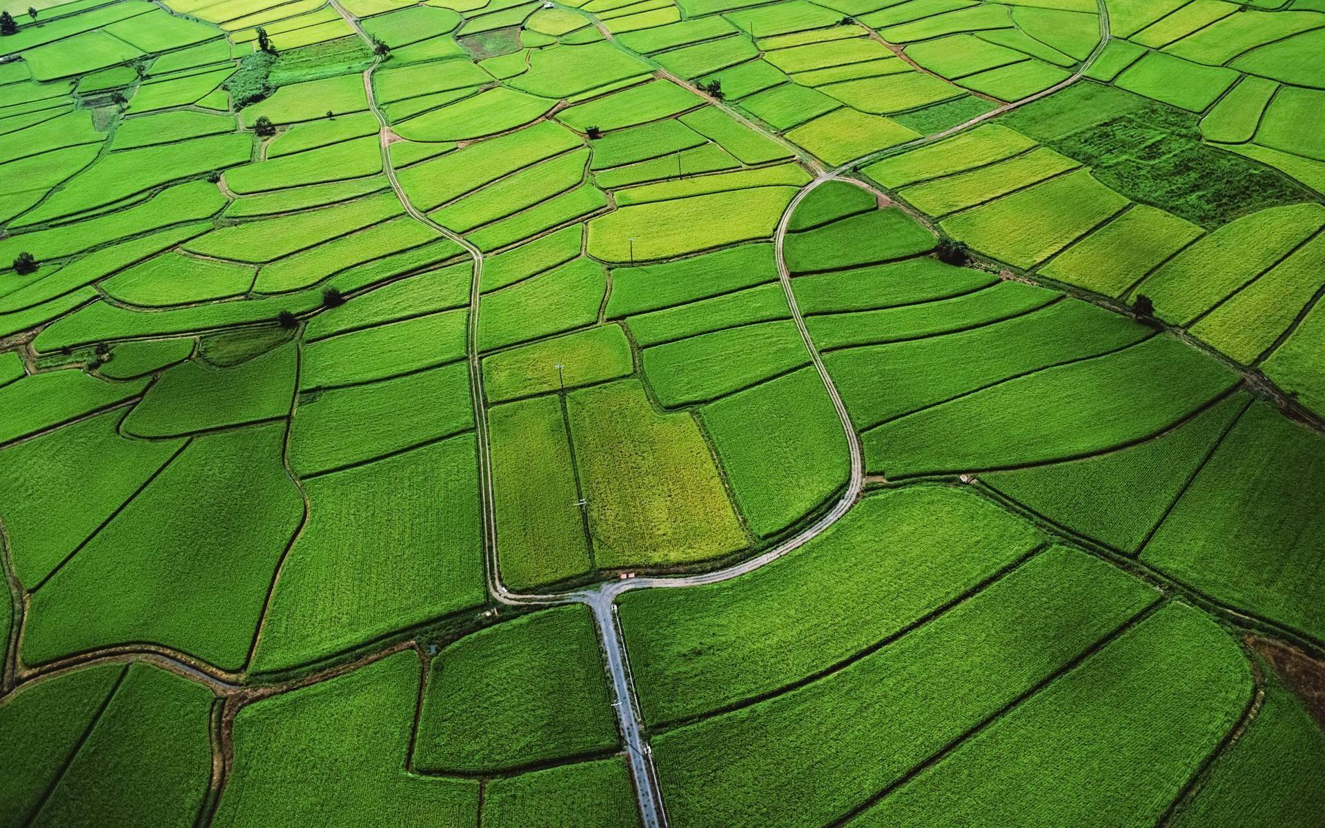 Wallpaper Nature Beauty Green