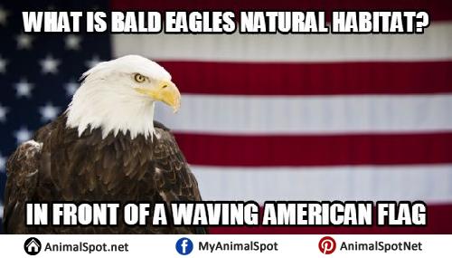 bald eagle memes images