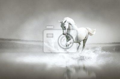Papier peint cheval blanc qui traverse l 39 eau pixers - Papier peint chevaux pour chambre ...