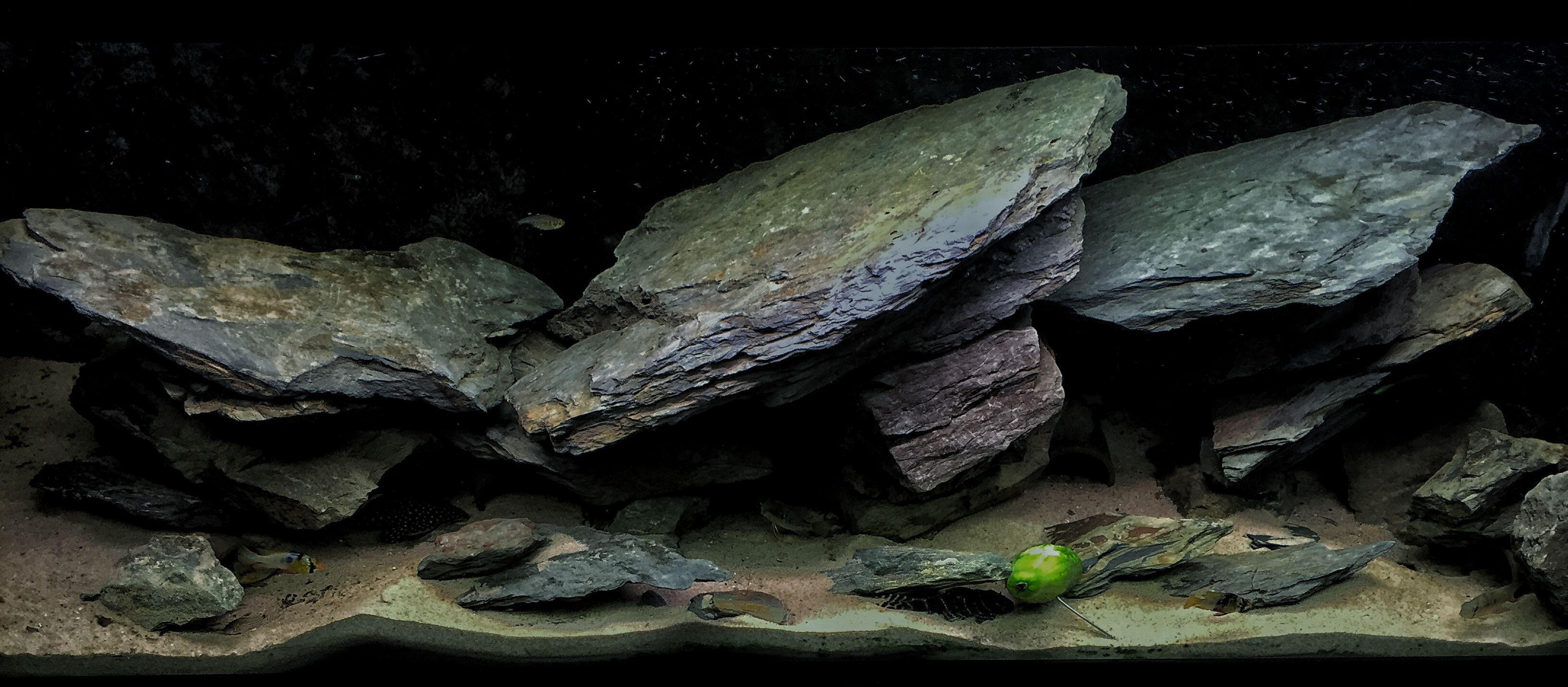 0d394cf32e8bc0dc8e1906d3941ac288 Luxe De Crevette Aquarium Des Idées